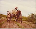 Rufus Laine dual plow
