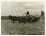 Loading fodder into a wagon
